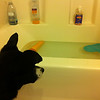 Waiting for the OK to hop in the tub - January 3, 2013