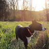 Sunset at the Dog Toy Proving Grounds, 03/06/12