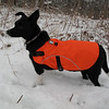 In the second biggish snowstorm of Winter 2010/2011, at the Secret Dog Toy Testing Facility.