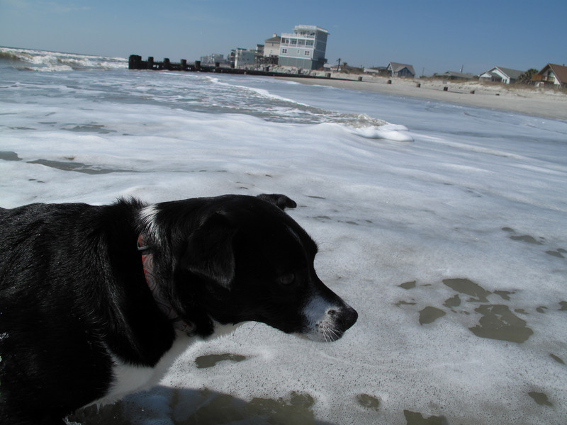 """Kenda's first trip to the beach - Folly Island, SC 13 March 2011 """"Crap this water is cold."""""""