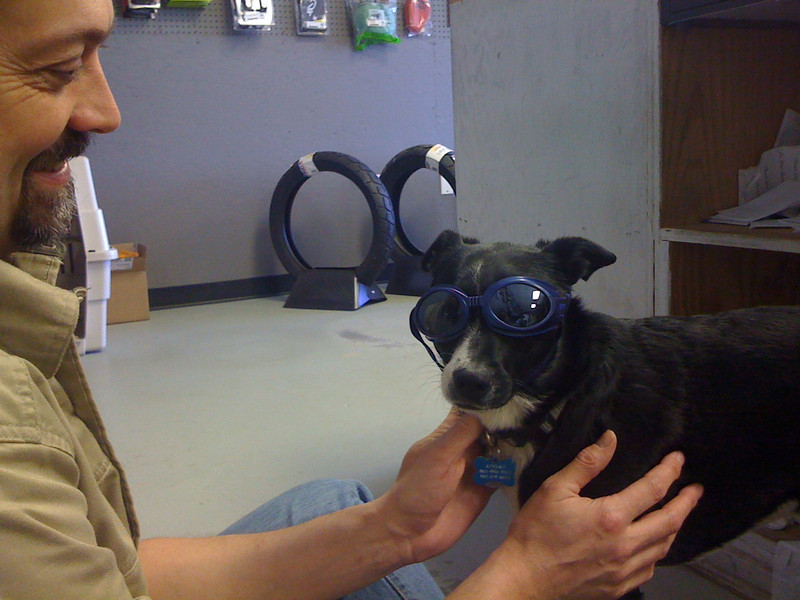 I don't think these Doggles fit me...