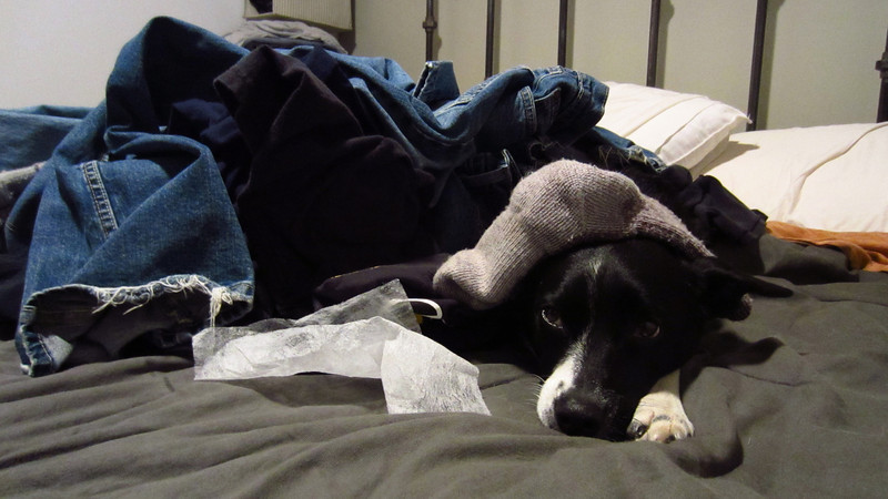 Fall has arrived, so it's time to burrow under the warm laundry for a nap.