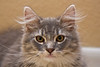 2008-11-21_22-59-52_Kenneth's_cat