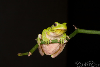 FrogKing-16
