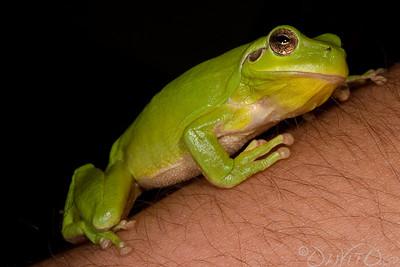 Frog Macro EF 100 / 5D