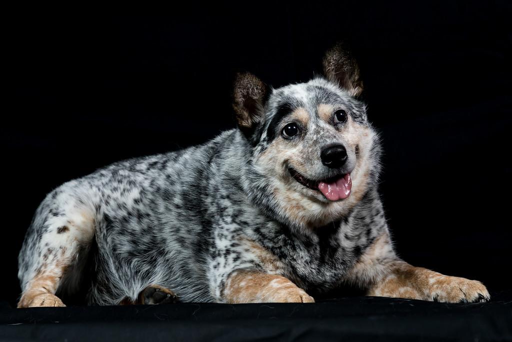 IMAGE: https://photos.smugmug.com/Animals/Kiah/Kiah-Portraits-02-05-17/i-mgQcTNG/1/XL/Kiah020417-033-XL.jpg