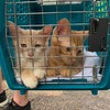 Ginger and Tanji on Arrival