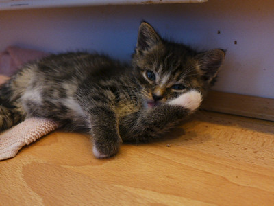 Kittens June 2014