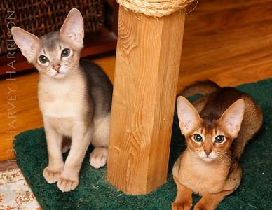 cats_301_DSC00357_2013-04-09