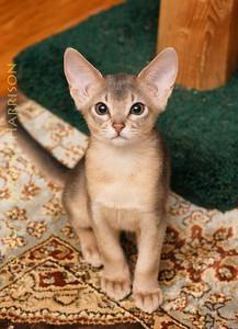 cats_304_DSC00360_2013-04-09