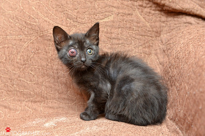 Crazy Eye Kittens
