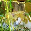 Kitties on my walks!