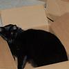 Big Kitty loves his cardboard box.