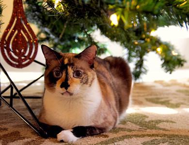 Kitty Meow Meow