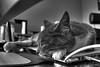 Kitty Chillin' on the Mac