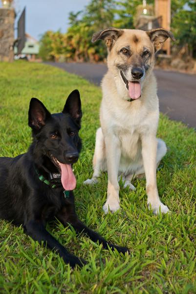 Tara & Koa