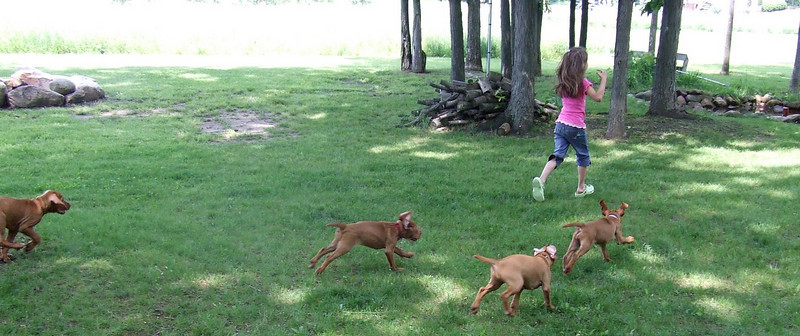 The Woeby's have arrived! Ashley aka Star is being pursued by the puppies!