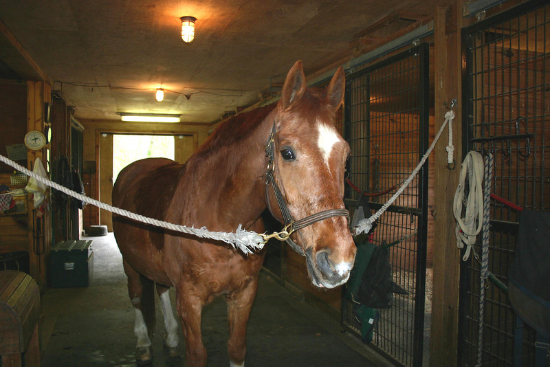 """Andante, aka """"A"""", a 20+  yr old Hanoverian schoolmaster, about 16.2 H"""