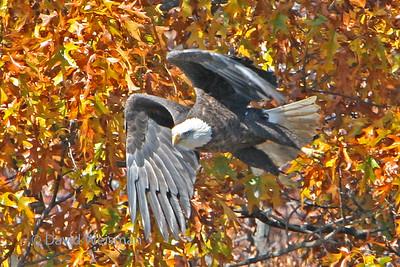 Eagle 6568