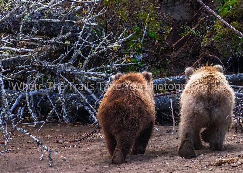 Bear Butts
