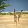 Lake Manyara, animals-34
