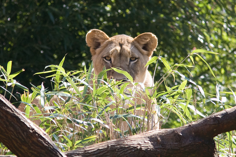 """She is watching me!  Thinking """"dinner!"""""""