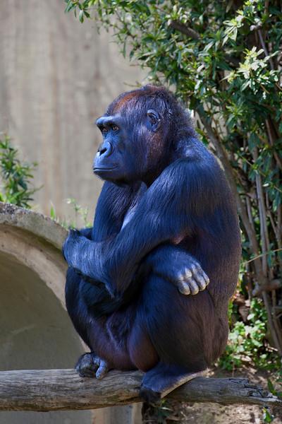 National Zoo, Washington DC