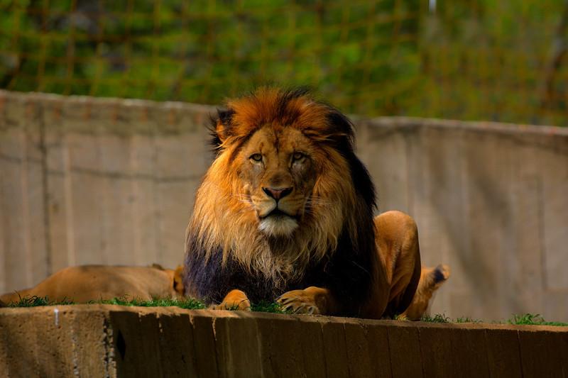 National Zoo, Washington DC, HDR