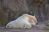 Seneca Park Zoo, Rochester,NY Bear sleeping_