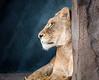 Seneca  Zoo 4/21/17