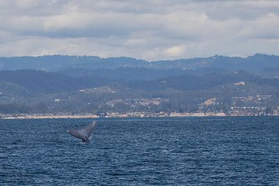 - Monterey Bay, CA, USA