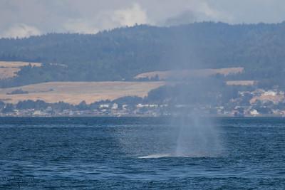 - Monterey Bay, CA, USA
