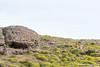 The Puma and the Guanaco - Chile