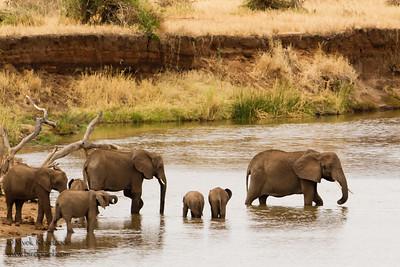 African Elephant herd - Tarangire National Park, Tanzania