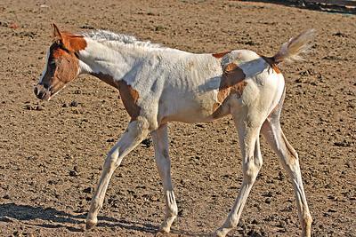 Horses by Bill