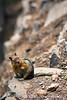 Ground Squirrel Reconsidering