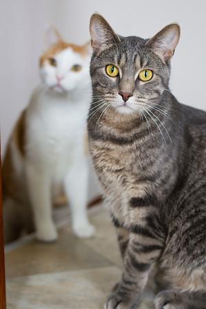 Laura's Kitties