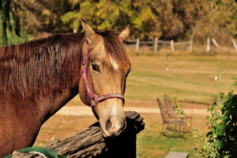 Horse - 41
