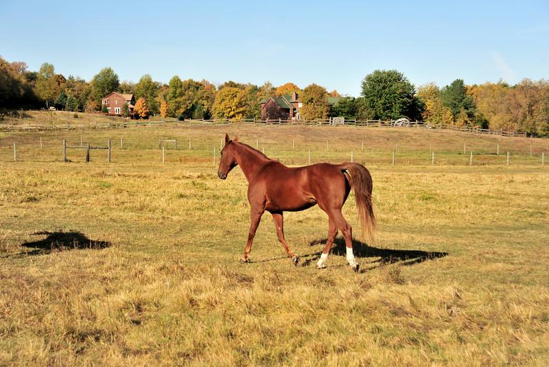 Horse - 12