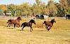 Horse - 23