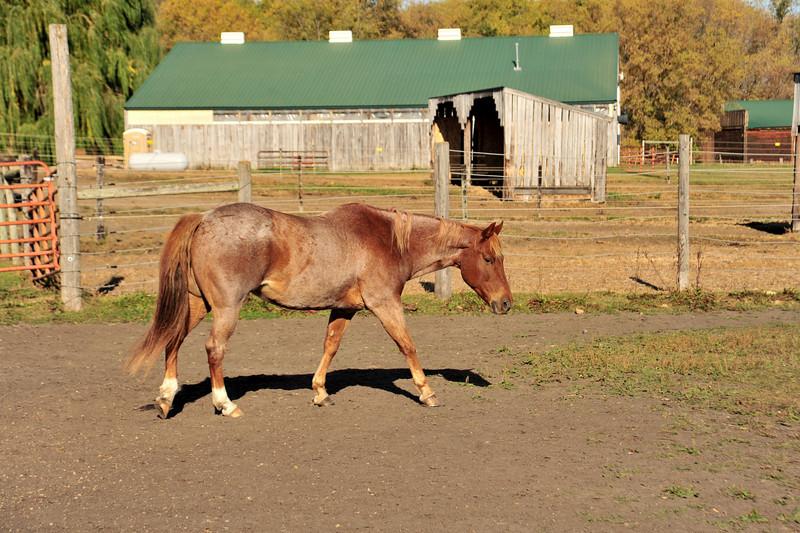 Horse - 34