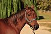 Horse - 40