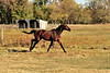Horse - 19