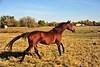 Horse - 08