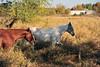 Horse - 27