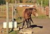Horse - 35