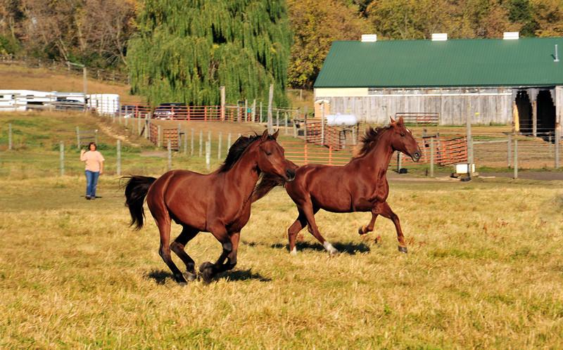 Horse - 17