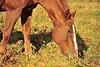 Horse - 38