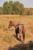 Horse - 26