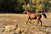 Horse - 13